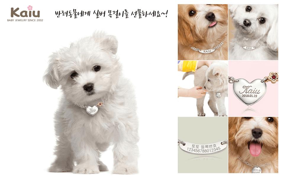 까이유 - 반려동물 목걸이 1차